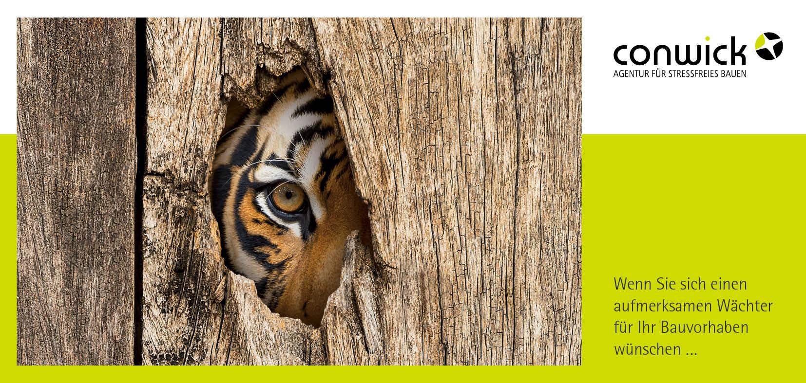 Ein Tiger lugt durch ein Loch in einer Holzwand