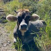 Wie sieht eigentlich ein Kuhfuß aus – Conwick, Agentur für stressfreies Bauen